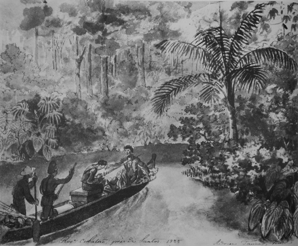 TAUNAY, Aimé-Adrien. <em>Riv.e Cubatão, près de Santos</em>, 1825. Wash painting, Chinese ink on paper. Archives of the Academy of Sciences (Saint Petersburg).